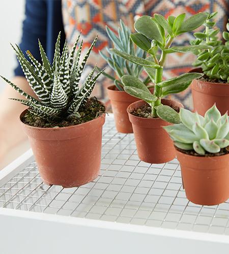 Pflanzen am Gitter verteilen