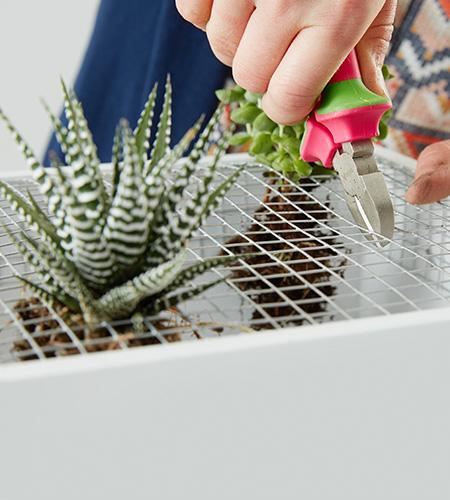 ...kleine Öffnungen zwicken und Pflanzen einsetzen