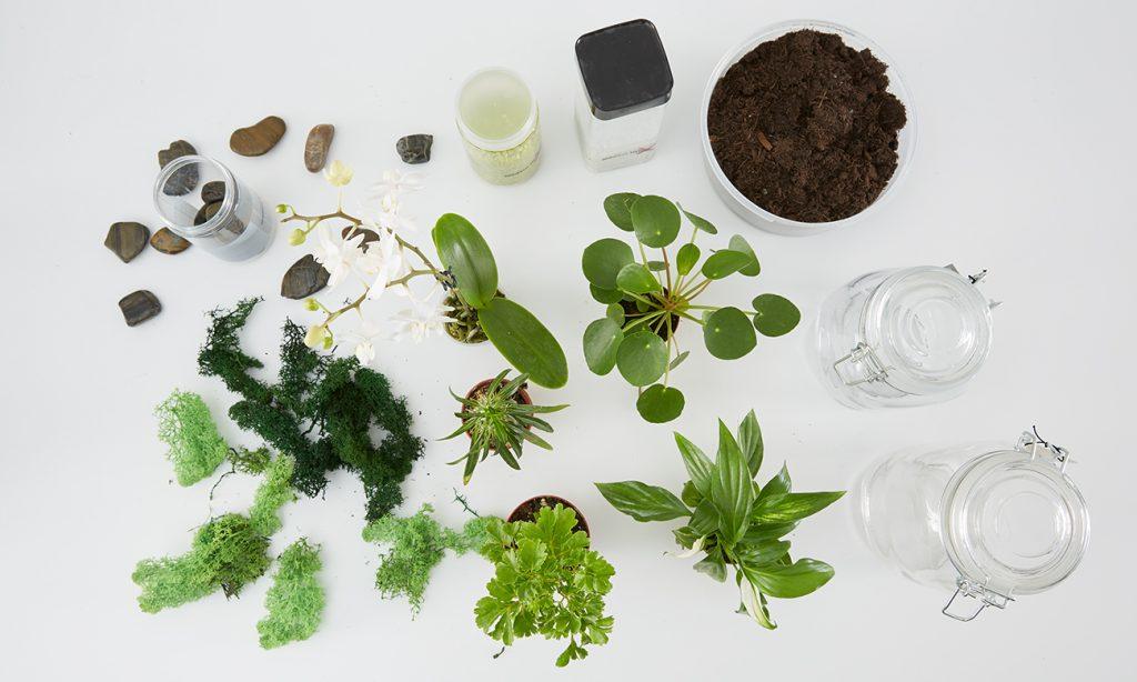 Pflanzen Terrarium selber machen - was man dazu benötigt