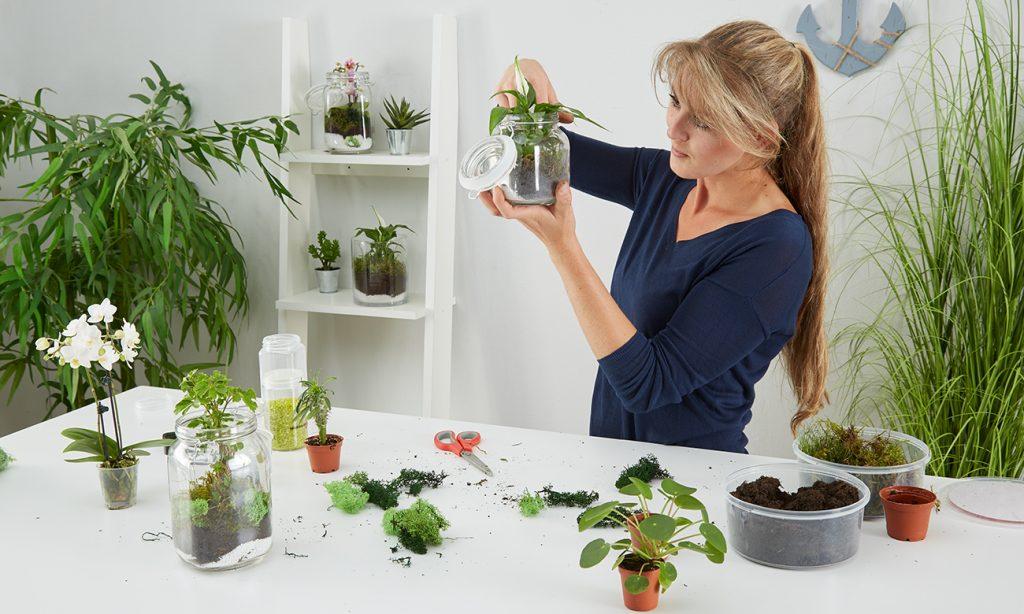 Abschließenden noch Moos unsPflanzen Terrarium geben