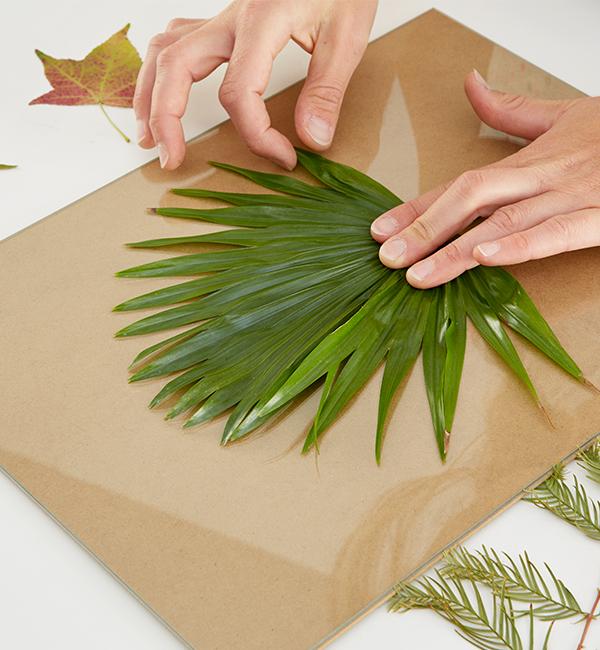 Die getrockneten Pflanzen zwischen die Gastplatten legen