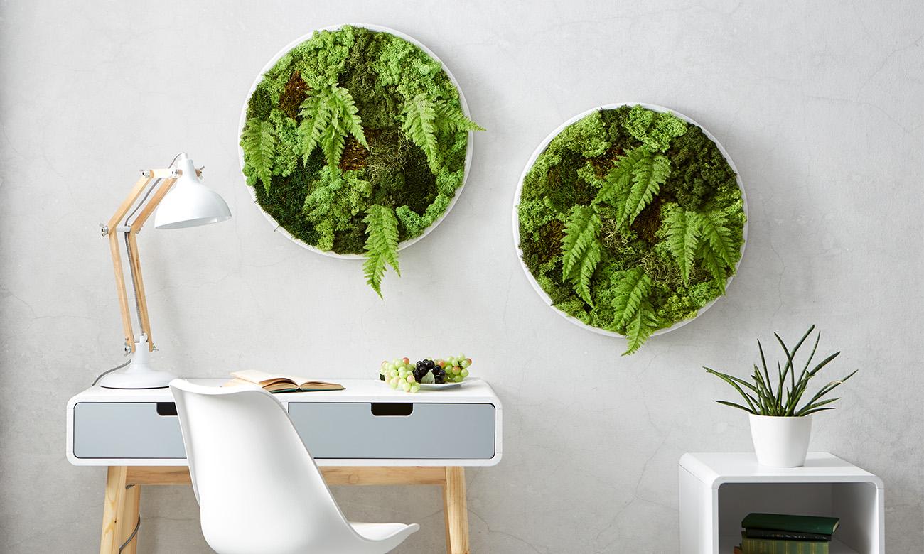 moosbild selber machen m max blog. Black Bedroom Furniture Sets. Home Design Ideas