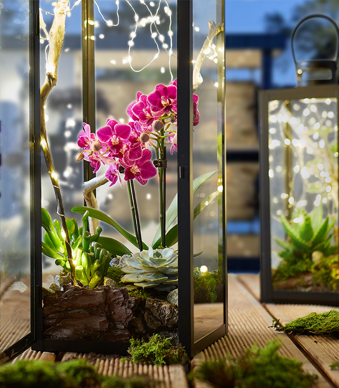 Laterne dekorieren mit Pflanzen und Lichterkette - mömax Blog - Yvonne bastelt eine Terrassendeko
