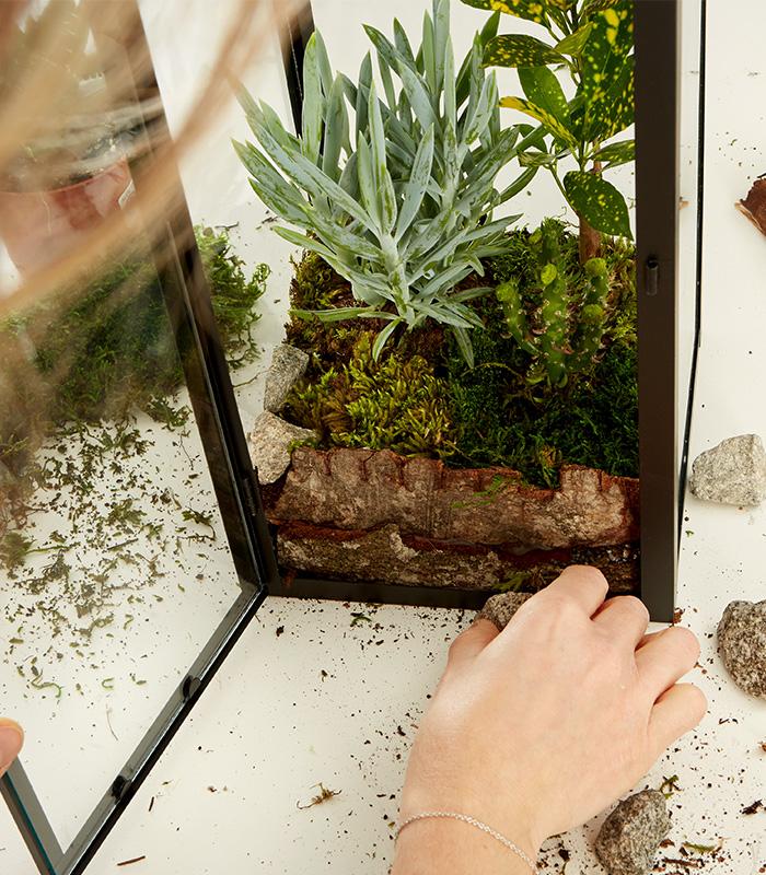Pflanzen in die Laterne setzen und mit Moos dekorieren